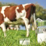 Grass Fed Milk Cheddar Cheese
